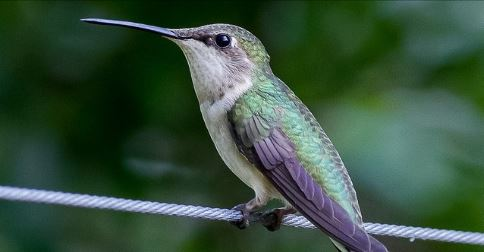 What Does Google Hummingbird Mean For Bloggers